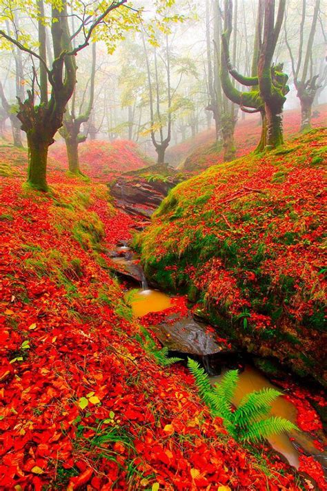 Red Forest, Sintra, Portugal   Beautiful nature, Nature