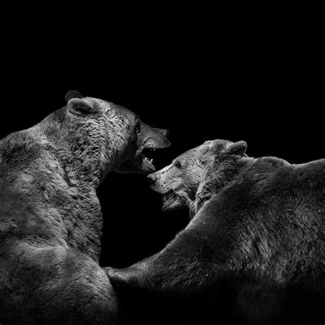 These Black And White Animals By Lukas Holas Are Just